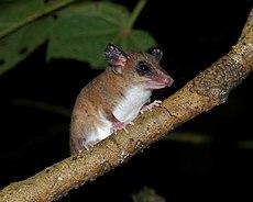 Flickr - ggallice - Rodent.jpg