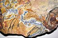 Flint (Vanport Flint, Middle Pennsylvanian; Nethers Flint Quarries, Flint Ridge, Ohio, USA) 168.jpg
