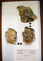 Flints Sturge collection Caddington pit C.jpg