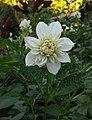 Flores de Guaramiranga CE - White 4.jpg