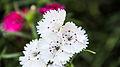 Flower-111.jpg