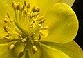 Flower (17657979850).jpg