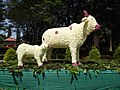 Flower show-5-cubbon park-bangalore-India.jpg
