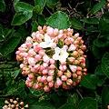 Flowerball - Flickr - Stiller Beobachter.jpg