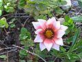 Flowere-ymm.jpg