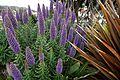 Flowers by Laguana Beach (3431013280).jpg
