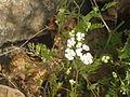 Flowers by stones.JPG