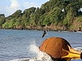 Flying Bird Bioko Island.jpg