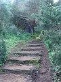 Forêt sidi Boughaba sentier-wtajri.jpg