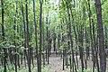 Forest-park - panoramio (1).jpg