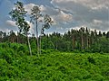 Forest - panoramio (30).jpg