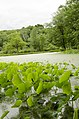 Forest Park, Springfield, MA 01108, USA - panoramio (39).jpg