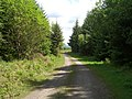 Forest Road - geograph.org.uk - 447903.jpg