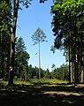 Forest by Ptýrov.jpg