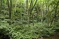 Forest in Mt.Gozen (Ibaraki) 10.jpg