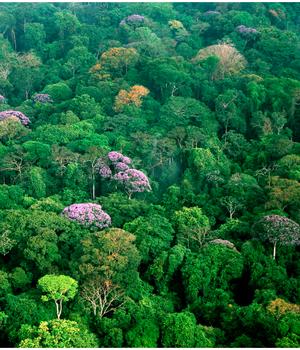 Resultado de imagen de cubierta por densas selvas.
