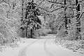 Forest road Slavne 2017 BW G8.jpg