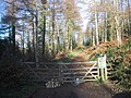 Forest track on Bovey Down - geograph.org.uk - 1059469.jpg