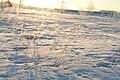 Frost Field (3266723308).jpg