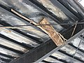 Furnas Mill Bridge, log debris.jpg