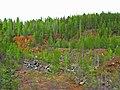 G. Nizhnyaya Tura, Sverdlovskaya oblast' Russia - panoramio - Oleg Seliverstov.jpg