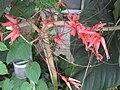 Gardenology-IMG 7915 hunt10aug.jpg