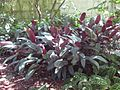 Gardenology.org-IMG 0466 rbgs10dec.jpg