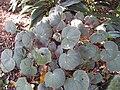 Gardenology.org-IMG 1242 rbgs10dec.jpg
