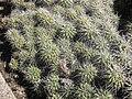 Gardenology.org-IMG 2160 hunt0903.jpg