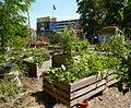 Gemeinschaftsgarten am Platzprojekt Hannover.jpg