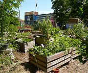 Gemeinschaftsgarten am Platzprojekt Hannover