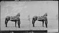 Gen. Ulysses S. Grant and horse - NARA - 527523.tif