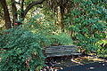 General view - San Francisco Botanical Garden - DSC00002.JPG