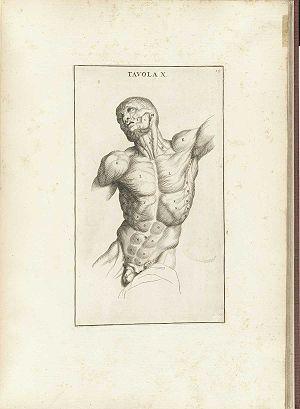 Muskulatur – Biologie