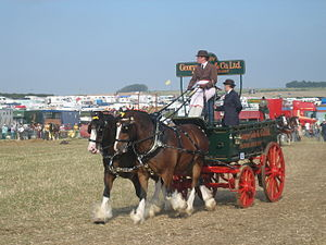 Trolley (horse-drawn) - Brewer's dray at Great Dorset Steam Fair, 2008  A trolley differs from this in that the rear wheels are small, like the front ones.
