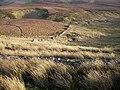 George Mea Rigg - geograph.org.uk - 287543.jpg