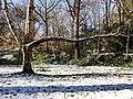 Georgia snow IMG 5613 (38082715925).jpg