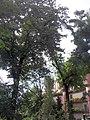 Giardino botanico di Brera (Milan 30.jpg