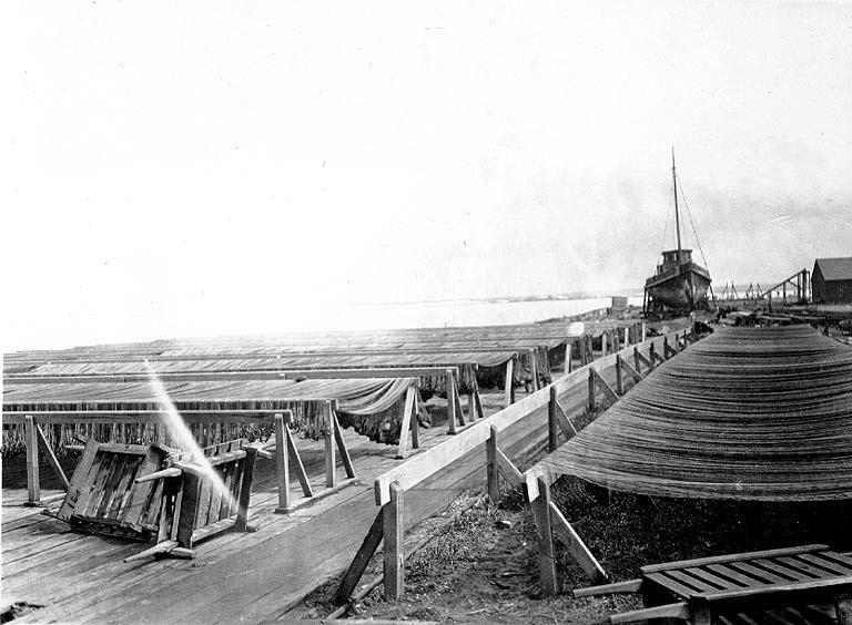 Gillnets on racks, Nushagak, Alaska, 1917 (COBB 26).jpeg