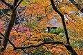 Ginkakuji through the momiji leaves (2099375081).jpg
