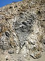 Gneiss with mafic enclave (Archean; Norris South roadcut, Madison County, Montana, USA) 5 (45479834612).jpg