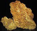 Gold vein stockwork in limonite (Gold Flake Vein, Farncomb Hill, near Breckenridge, Colorado, USA) 1 (16872102687).jpg