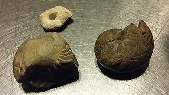 Sliabh an Iarainn - Goniatite Fossils at the shores of Lough Allen (Slieve Anierin)