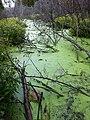 Green Pond (4984634493).jpg