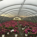 Greenhouse Nursery Picture.jpg