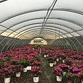 Greenhouse Nursery Picture.jpg
