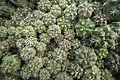 Greenhouses in qom عکس های گلخانه دنیای خار در روستای مبارک آباد قم 04.jpg