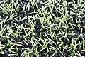 HK 油麻地 Yau Ma Tei 京士柏運動場 King's Park Sports Ground green man-made grass October 2018 IX2 03.jpg