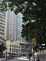 HK 灣仔 Wan Chai 莊士敦道 Johnston Road October 2017 IX1 Candlenut 石栗樹 Aleurites moluccana trees 01.jpg