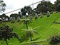 Hakgala botanical garden-2-nuwara eliya-Sri Lanka.jpg